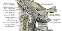 Suboccipital nerve
