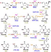 Nucleotides syn1