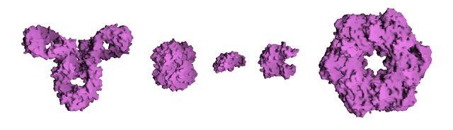 File:Protein Composite.jpg