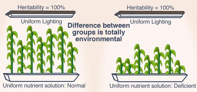 File:Heritability plants.jpeg