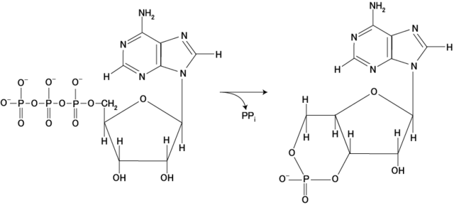 File:Adenylate kinase.png