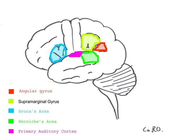 File:Surfacegyri.JPG