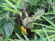Nest bird