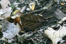Orange oak leaf bottom
