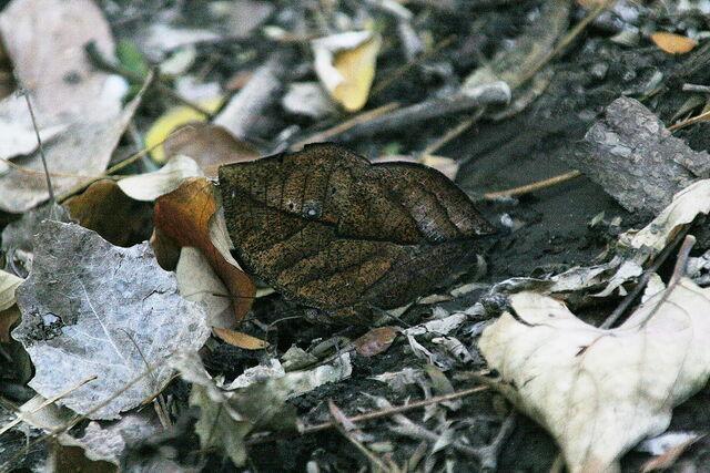 File:Orange oak leaf bottom.JPG