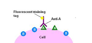 Immunohistochemicalstaining1
