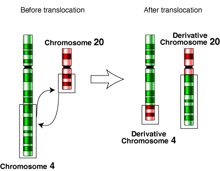 File:Translocation-4-20.png