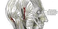 Marginal mandibular branch of facial nerve