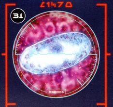 Midi-chloriaa.jpg