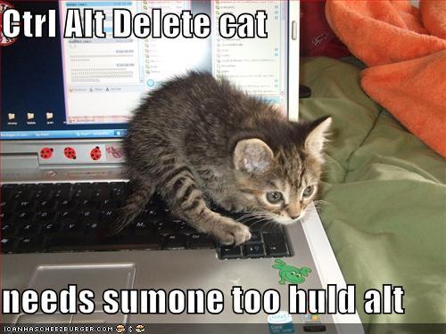 File:Funny-pictures-ctrl-alt-del-kitten.jpg