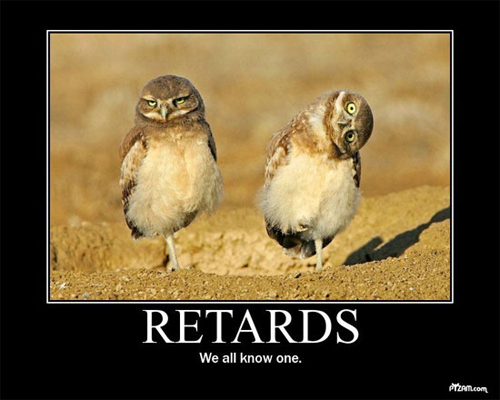 File:Retard-owls.jpg