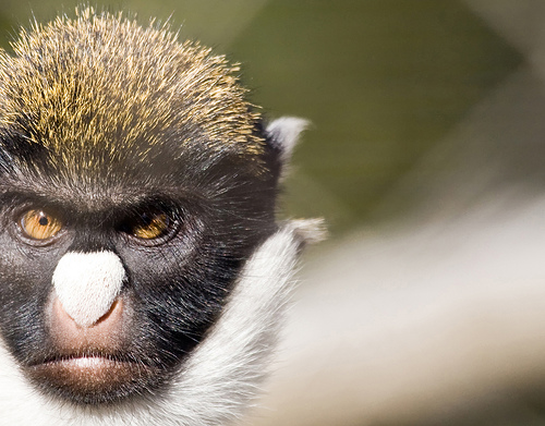 File:71.229 monkey.jpg