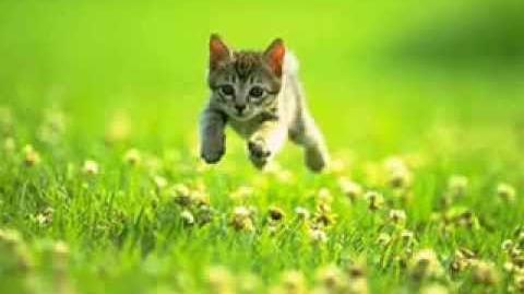 Cute little cat - SCARY POP UP!!!