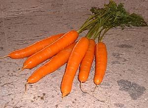 File:Zanahoria.JPG