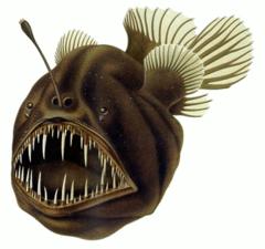 File:Anglerfish.png