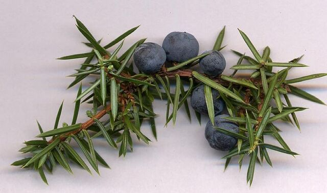 File:Juniper berries.jpg