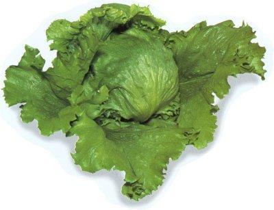 File:Lettuce.jpg