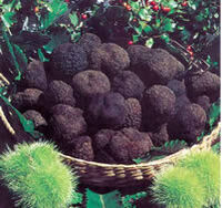 BlackTruffles