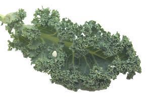 File:Kale.jpg