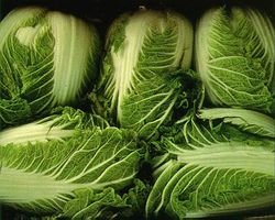 File:Ncabbage.jpg