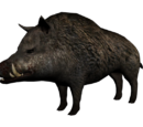 Gordo the Boar
