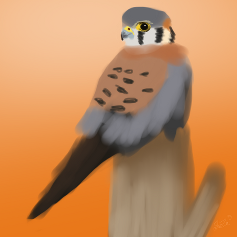 File:Kestrel.png