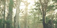 Forêt de Raccoon