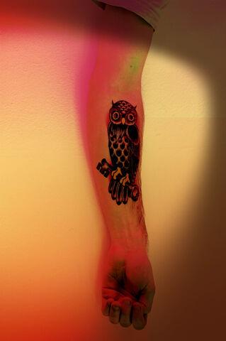 File:Owl.jpg