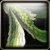 Emerald Flycatcher Icon