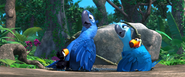 Rio (movie) wallpaper - Blu and Jewel with Rafael's Kid