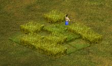 RoN Farm