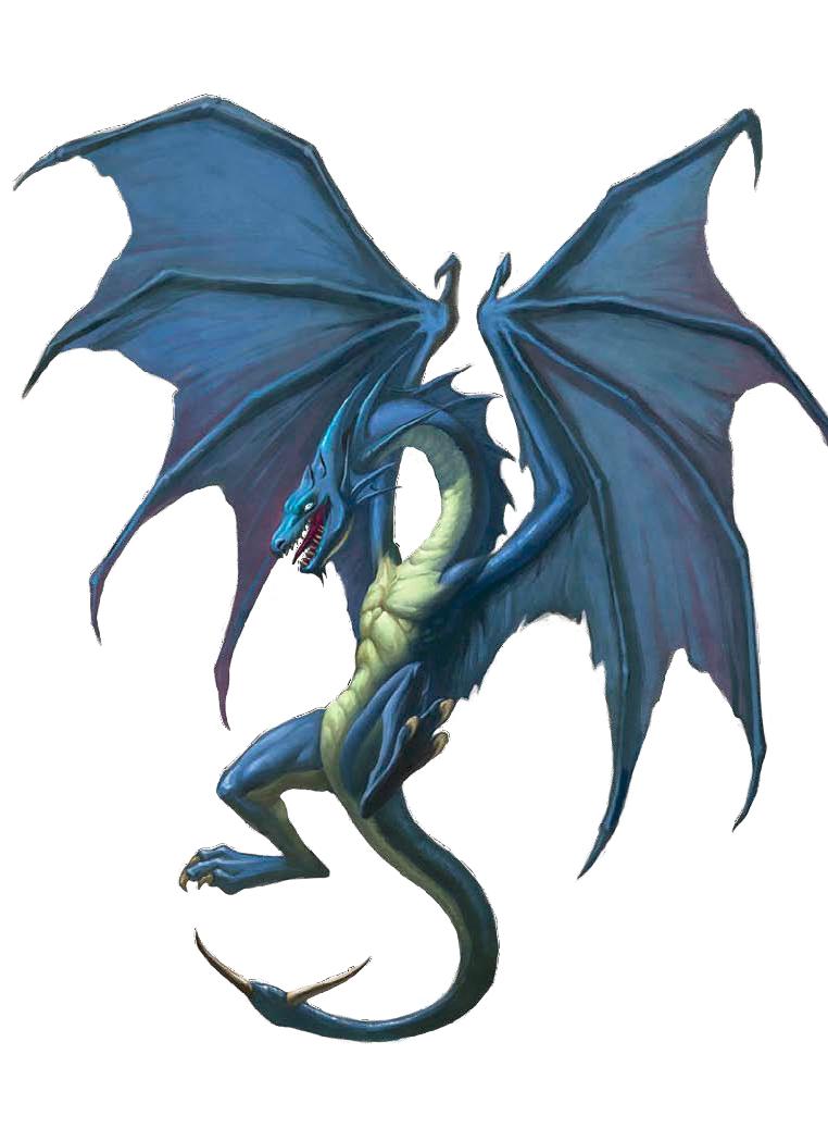 Dragons Dogma Black Cat