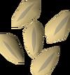 Barley seed detail