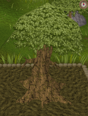 Spirit tree11