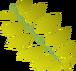 Curry leaf detail
