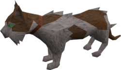 Wily cat (white and brown) pet