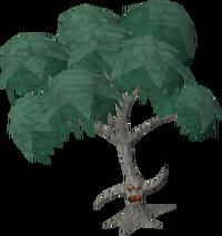 Eucalyptus Ent