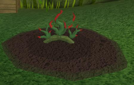 Vine herbs5