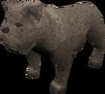 Bulldog (grey) pet
