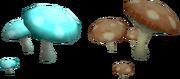Isafdar Mushroom