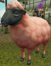 Sick-looking sheep (1) (dyed)