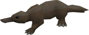 Platypus (grey) pet