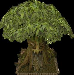 Spirit tree12
