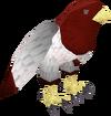 Zamorak bird pet