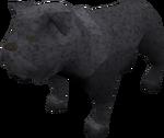 Bulldog (black) pet