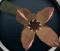 Livid plant detail