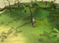 Herblore habitat hint4