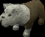 Bulldog puppy (white) pet