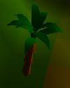 Palm tree (nice)