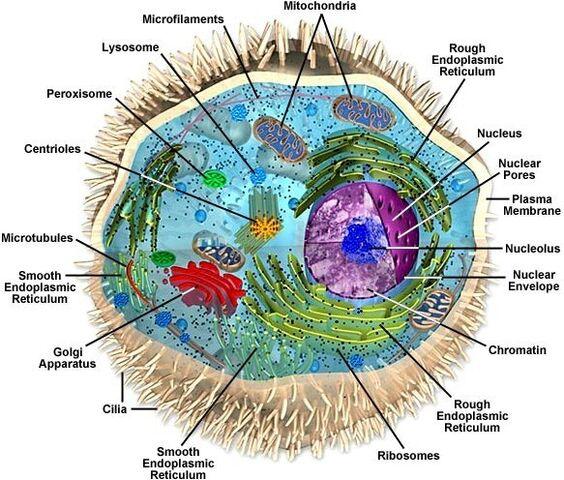 File:Eukaryote.jpg